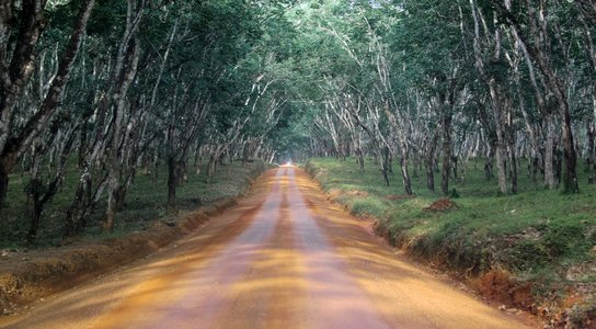 Liberia forest road