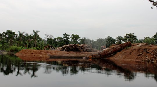 Systemic illegal logging in the DRC