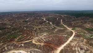 Drone image of rainforests cleared for oil palm, Pomio District, East New Britain Province, Papua New Guinea