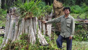 Ouch Leng, Cambodian environmental defender 2