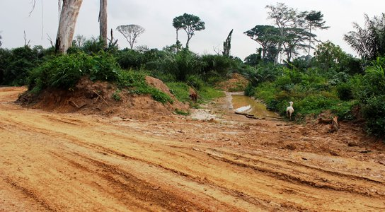 Illegal logging in the DRC