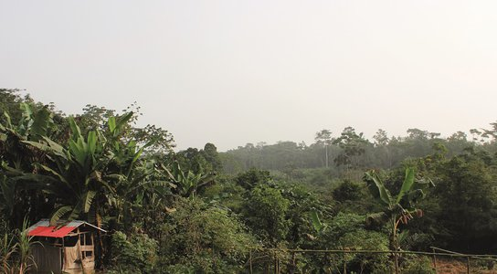 Liberia Forestry