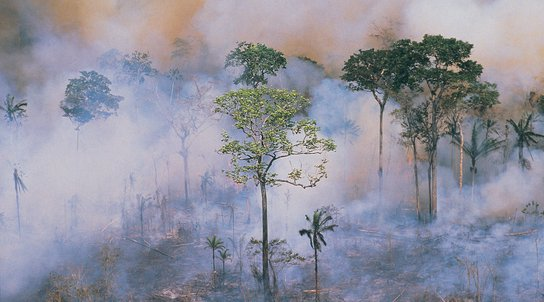 Amazon forest fires. Copyright: Getty images