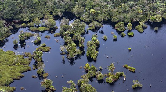 Aerial shot of Congo basin peatlands