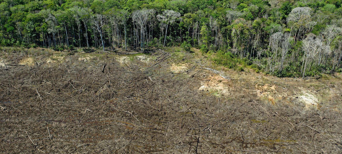 Brazil Environment Deforestation