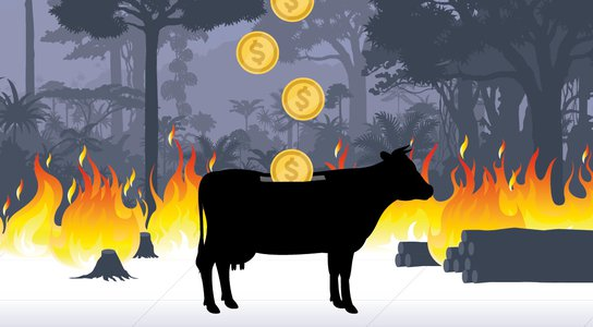Beef, Banks and the Brazilian Amazon listing image