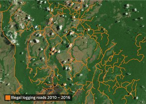 Illegal logging 2010 - 2016
