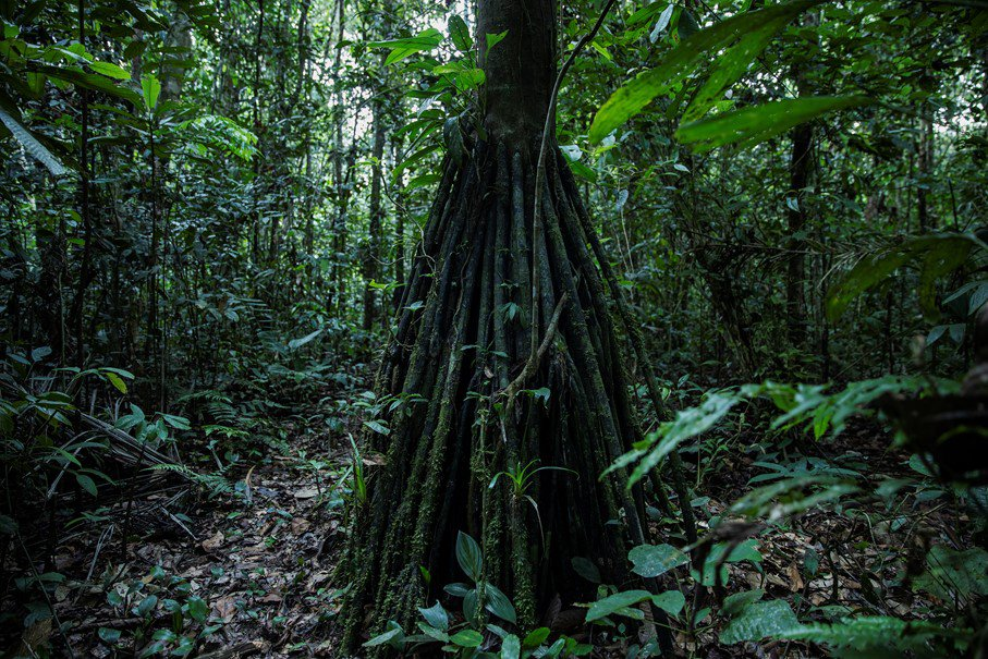 Panos tropical forest photo