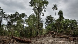 Logging operation in PNG