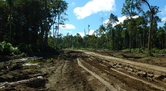 Logging in East Sepik Province