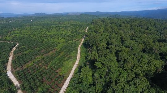 oil palm frontier