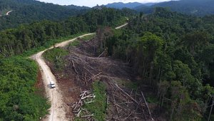 Logging road, FCA 15-03, Open Bay area, East New Britain, PNG; drone still