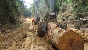 RS6143_forest operations 107.jpg