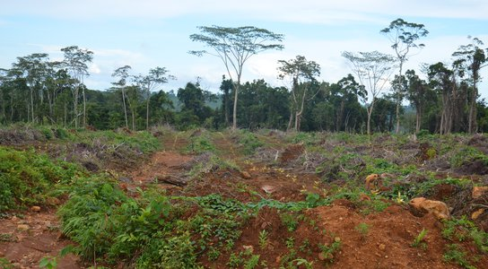 Maxland (PNG) Limited 'rubber plantation', Manus Island, PNG