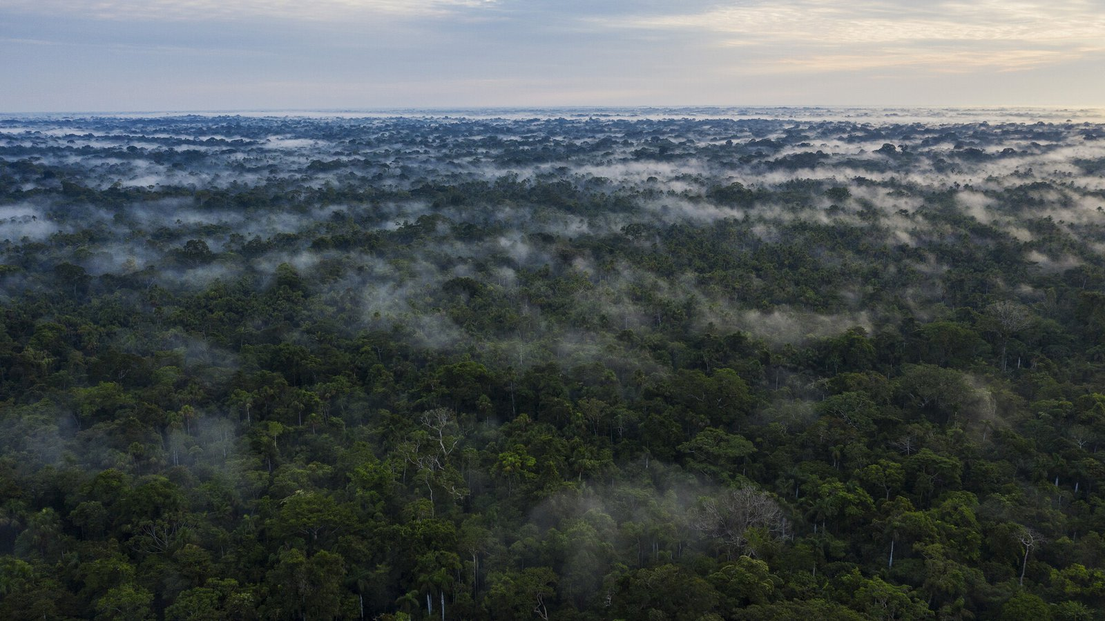 Photo showing intact forest and biodiversity in Acre state, Brazil, November 2020.  Lalo de Almeida/Panos/Global Witness
