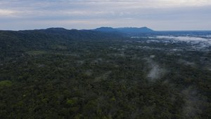 Rainforest covers most of the Brazilian state of Acre