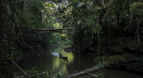 Intact forest and biodiversity in Acre state, Brazil, November 2020