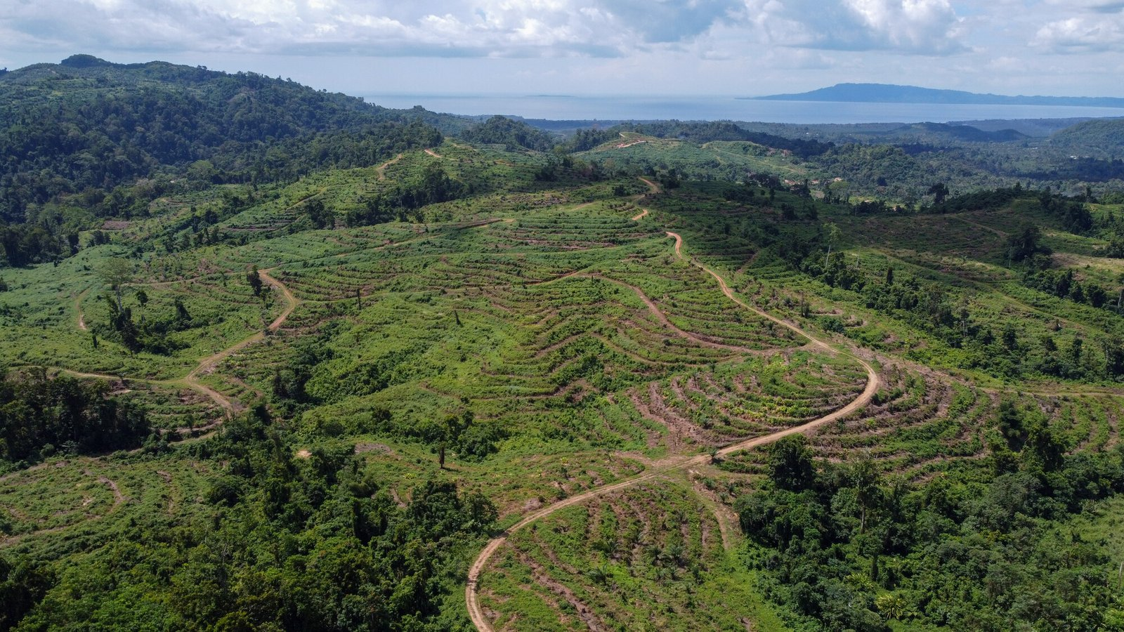 Papua New Guinea deforestation for palm oil