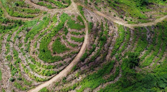 Land cleared for oil palm plantations in the Bainings region of East New Britain Province, Papua New Guinea