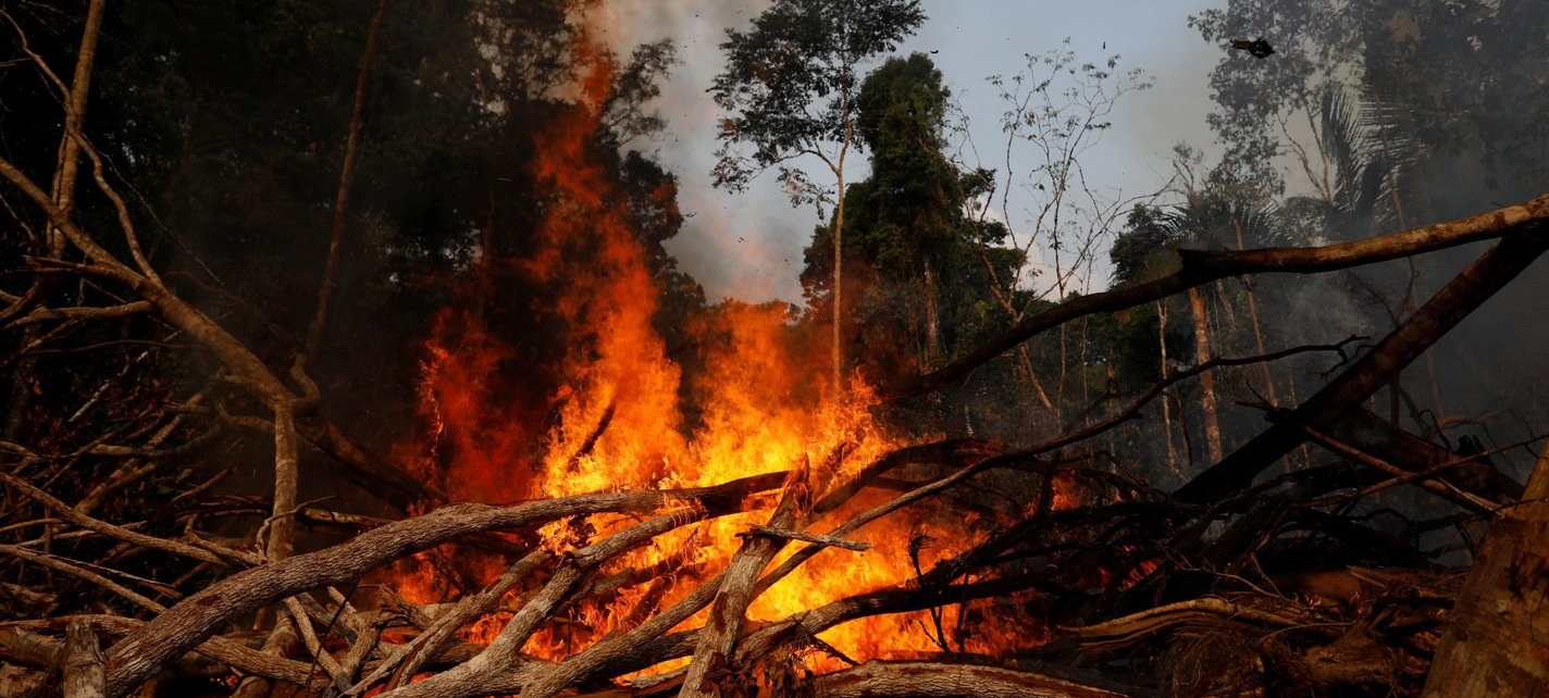 Forest burning - Reuters