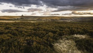 A section of the North York Moors near Goathland, Yorkshire, UK