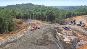 Tropical rain forest in Borneo being destroyed to make way for oil palm plantation
