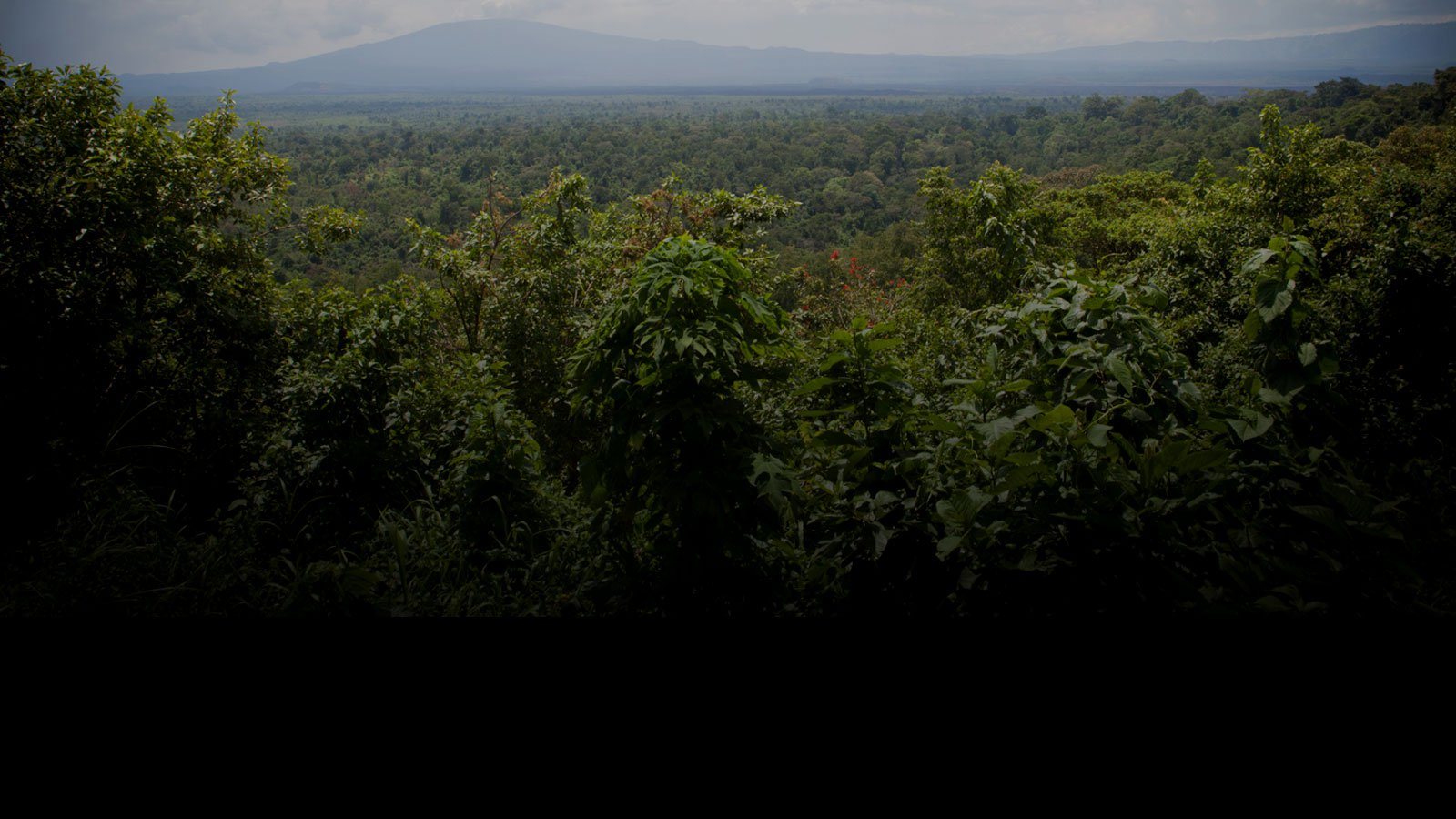 Virunga donate page